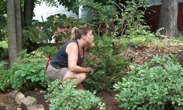 Plant Shenanigans