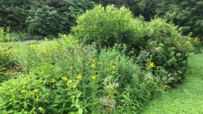 Wintergreen Native Demo Garden