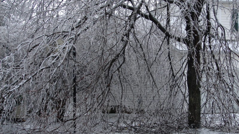 Winter Weather Can Be Hard On Trees