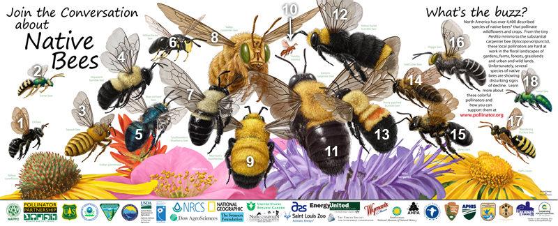 Ways To Increase Nesting Habitat for Native Pollinators