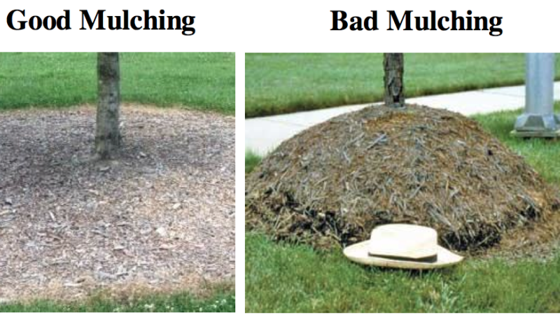 How NOT To Mulch