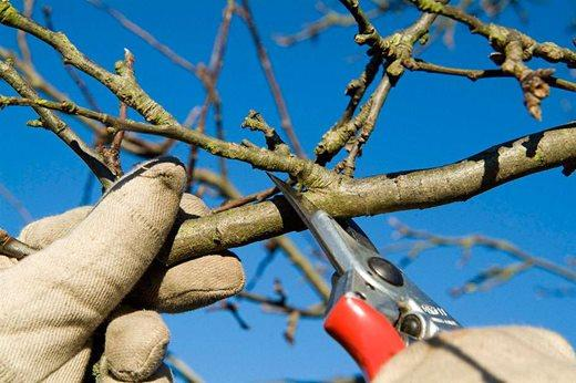 Why Winter & Spring Pruning is Best