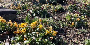 Annuals & Perennial Plants Create Winter Interest