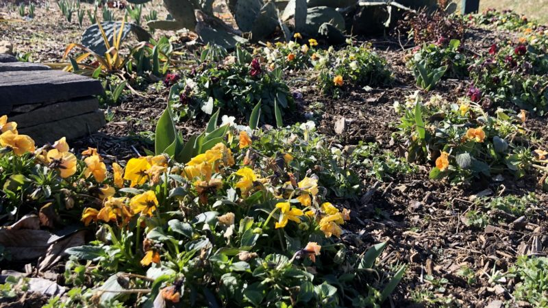 Annuals & Perennial Plants Create Winter Interest