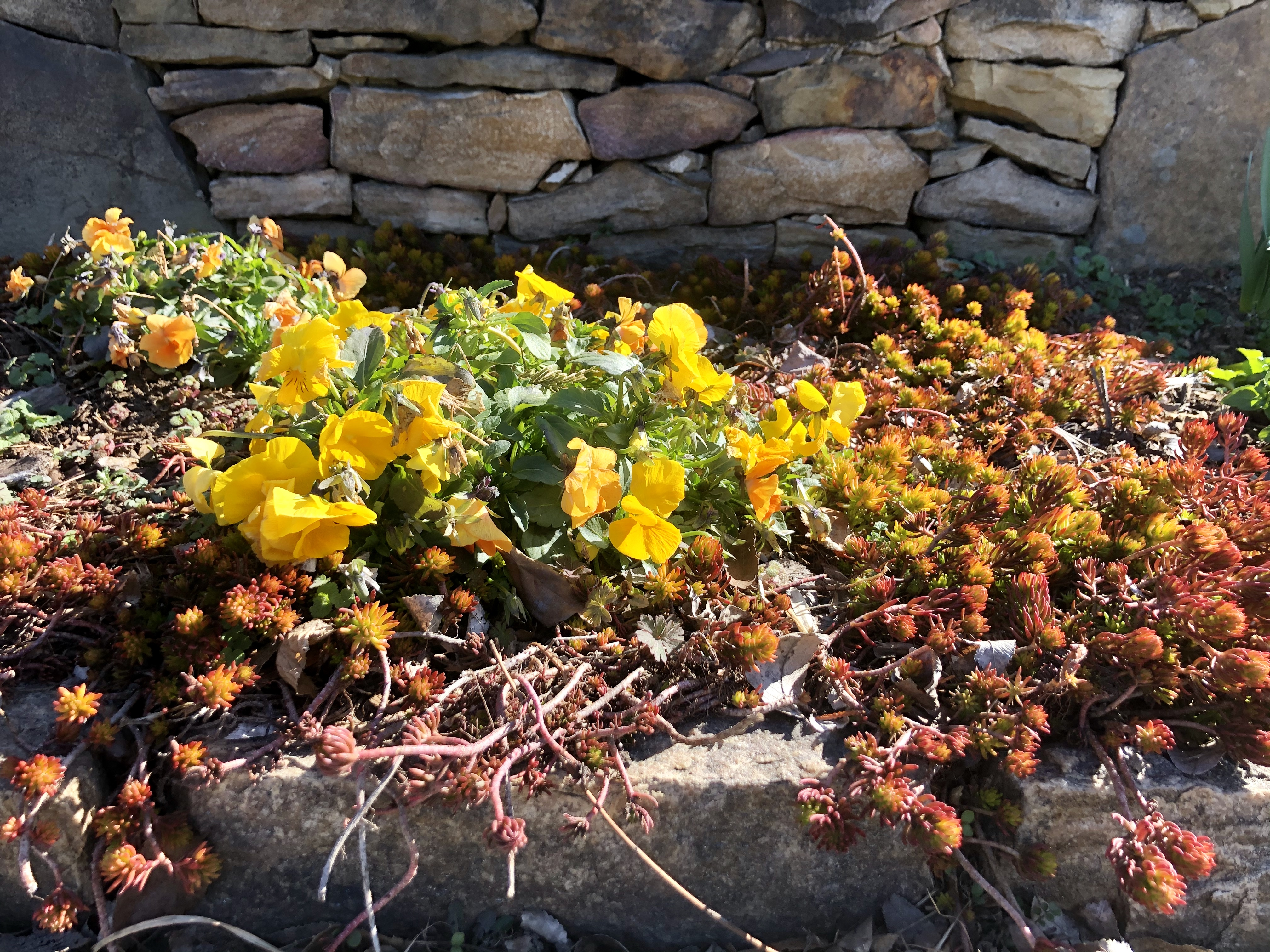 Annuals Perennial Plants Create Winter Interest Windridge